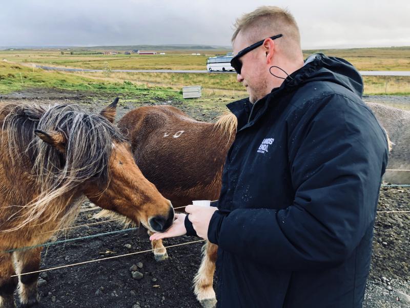 Feeding_horses